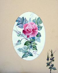 Scarlet and Pink Rose in Watercolor