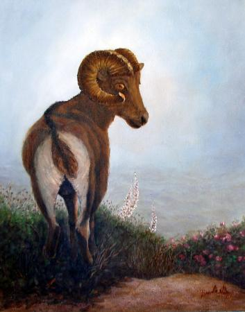 Big Horn Sheep Oil Painting